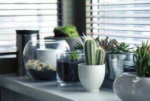 Los beneficios de tener plantas en tu baño