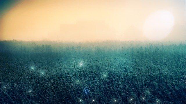 ¿Dónde ver luciérnagas?